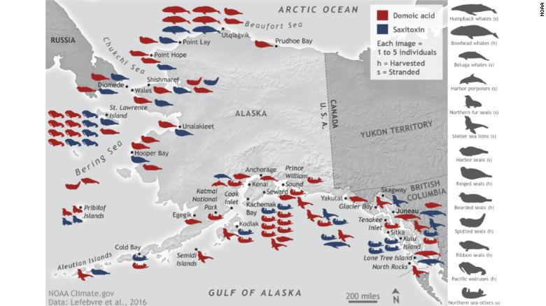 As the Arctic warms, new toxins are being introduced to the region. This map highlights the location and kind of toxins found in marine animal species from 2004 to 2013 in the Alaskan Arctic.