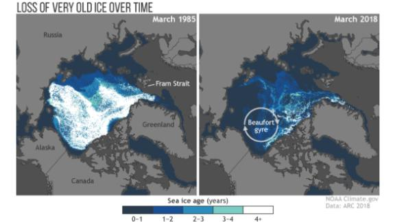 The loss of old sea ice is easy to see when you compare it to the amount of old ice -- ice that lasts through four or more melt seasons -- seen in 1985 (left) to 2018 (right).