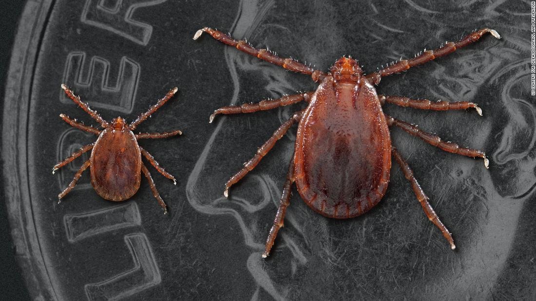 Asian tick that clones itself could spread fast and far in the US, study says