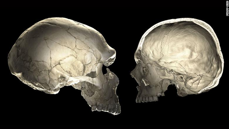 One of the features that distinguishes modern humans (right) from Neandertals (left) is a globular shape of the braincase.​