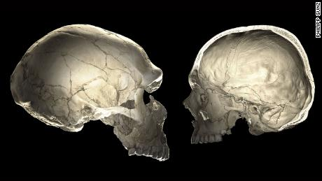 One of the features that distinguishes modern humans (right) from Neanderthals (left) is a globular shape of the braincase.​