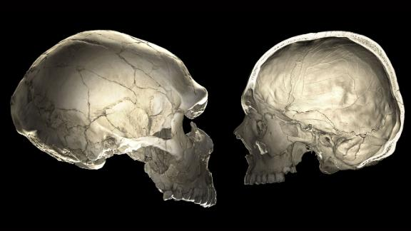 One of the features that distinguishes modern humans (right) from Neanderthals (left) is a globular shape of the braincase.