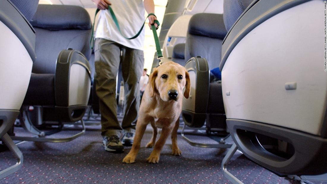 Delta Air Lines bans young puppies and kittens as support animals