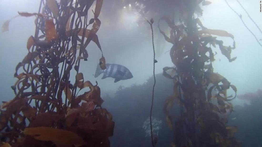 Exotic fish hitchhiked from Japan to California in tsunami debris