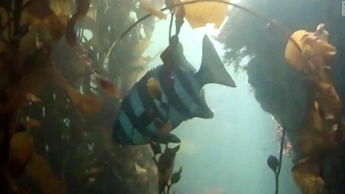Scientists believe fish hitchhiked via tsunami