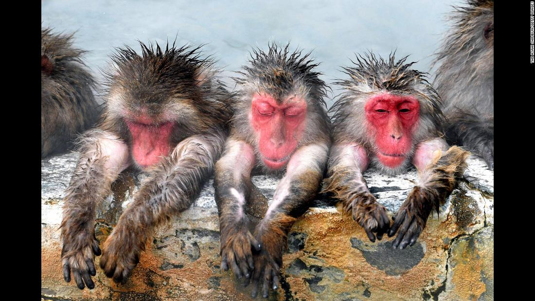 Japanese macaques relax in the bath at the Hakodate Tropical Botanical Garden on Sunday, December 9, in Japan.