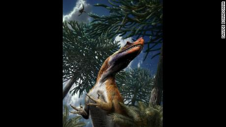 Saltriovenator was probably covered with primitive plumage and had horns on its lacrymal (eye socket) and nasal bones.