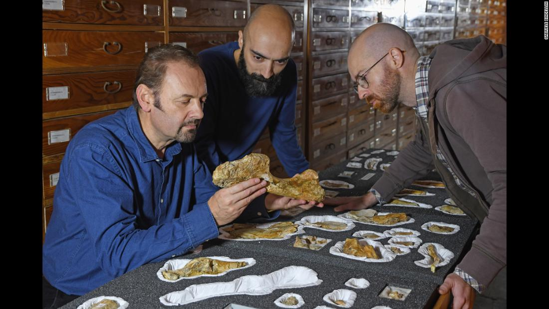 At the Natural History Museum of Milan, study authors Cristiano Dal Sasso, Simone Maganuco and Andrea Cau examine the bones of Saltriovenator.