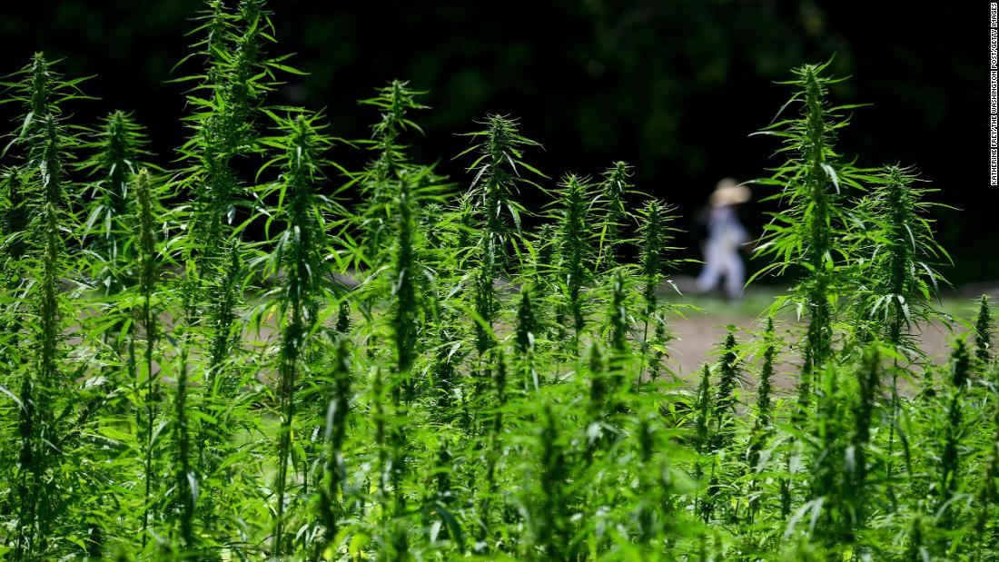Hemp won't get you high (and other things to know now that