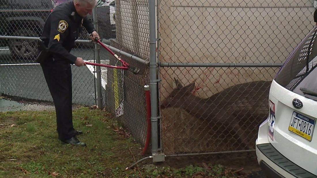 Buck traps itself in unlikely spot at news station