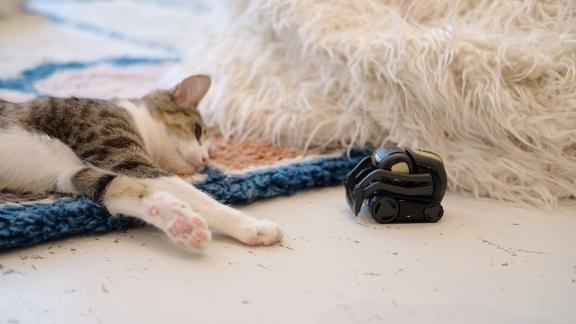 A cat lounges near a Vector robot at KitTea.