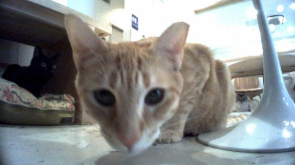 A photo of a cat, taken by a Vector robot at KitTea.