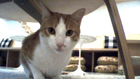 A shot of a cat taken by a Vector robot.