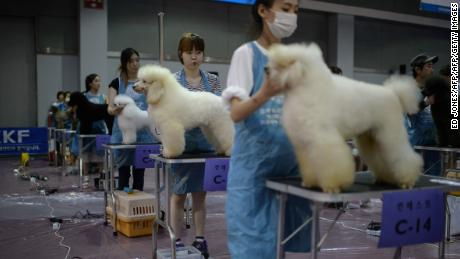 In South Korea, where the pet industry is in The care and maintenance of dogs is now big business.
