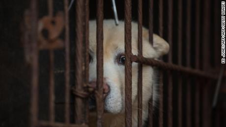 A dog looks out of a cage on a dog farm during a media visit by the Humane Society International (HSI) on April 27, 2016 in Wonju, southeast of Seoul.