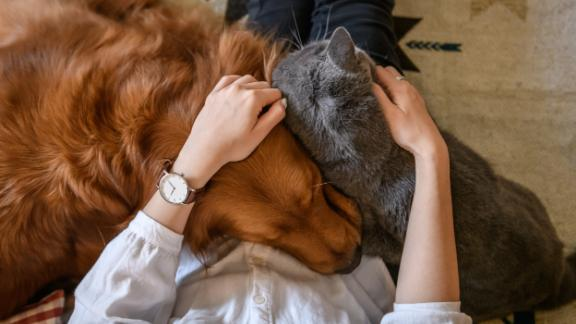 Research shows domestic violence victims will stay with an abusive partner to avoid being separated from their pets when options are not available.