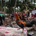07 indonesia tsunami 1224
