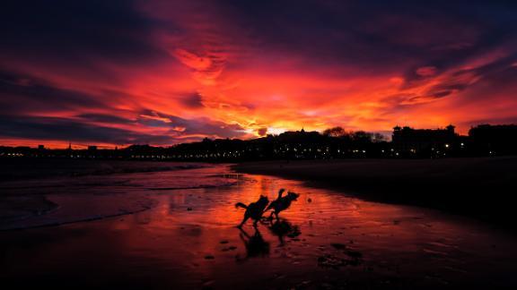 San Sebastian, Spain: Dogs run free along Ondarreta Beach as a dramatic sunset takes over the December sky.