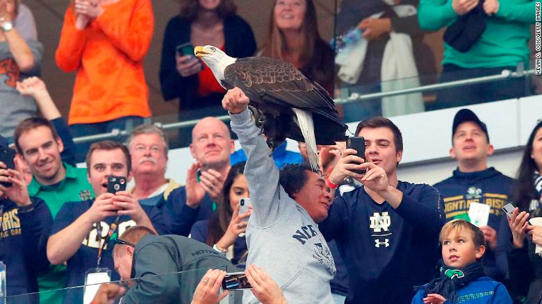 Cotton Bowl Eagle Got Confused During The National Anthem And
