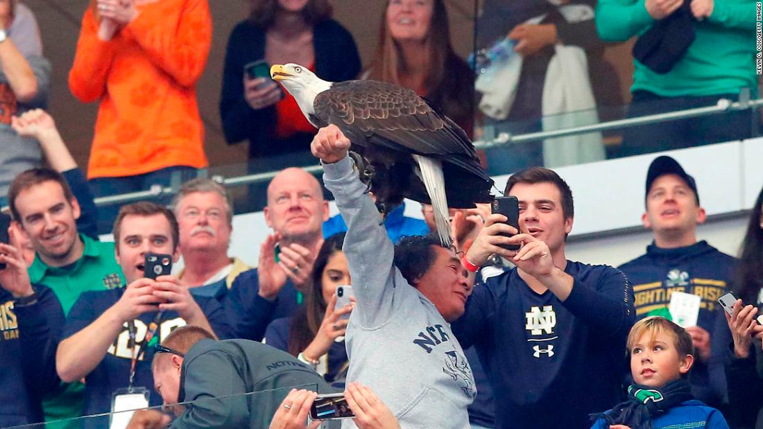 A bald eagle got confused during the National Anthem and landed on fans