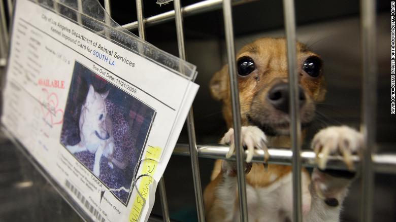 Pet Stores in California Will Only Sell Rescue Animals in 2019