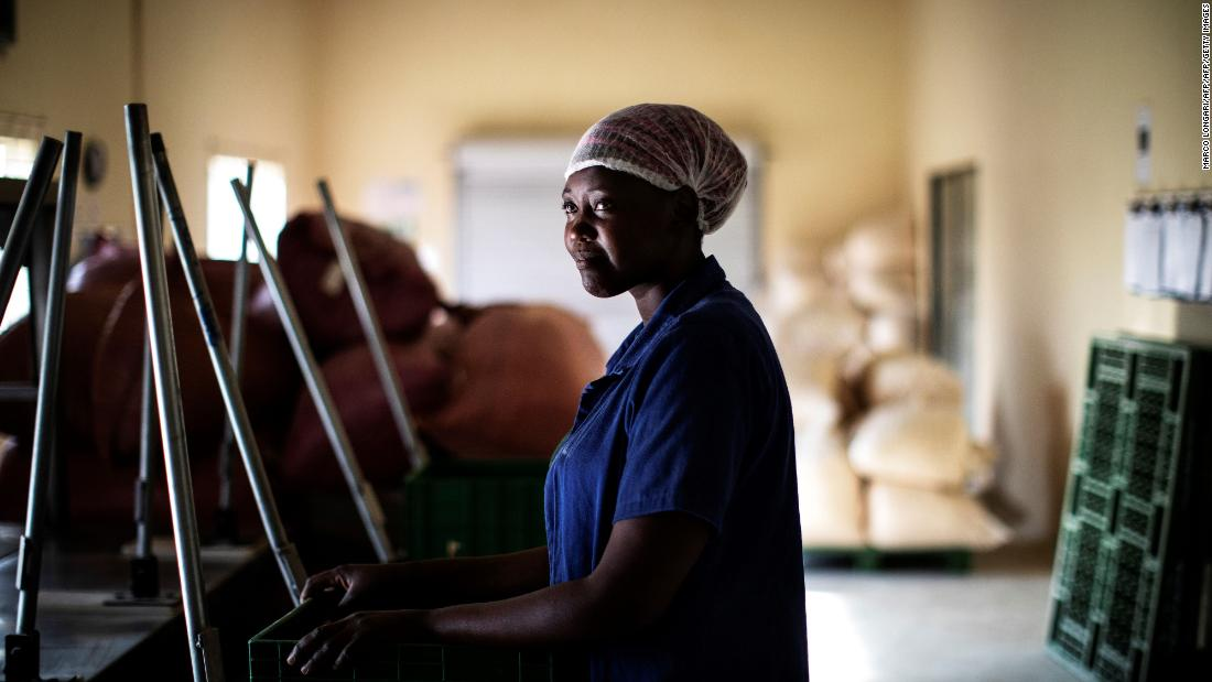 """We suspect that the demise of monumental baobabs may be associated at least in part with significant modifications of climate conditions that affect southern Africa in particular,"" a 2018  report concluded. <br />Pictured: Fhatuwani Maguvha, a worker, looks on at the lab facility of the Eco Products lab headquarters in Louis Trichardt, in the Limpopo Province. The seeds and chalky powder inside the baobab fruit have been used in everything from flavored soda, ice cream and chocolate to gin and cosmetics."