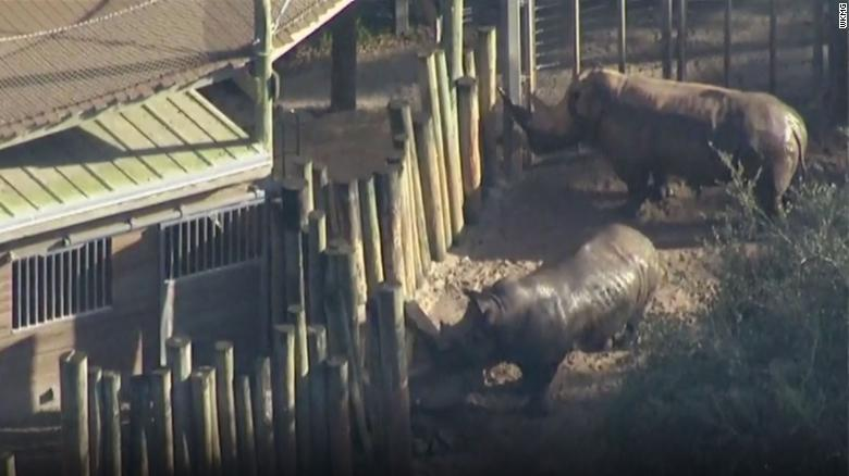 The Brevard Zoo in Melbourne, Florida, won't be offering its rhino experience until a safety review is completed.