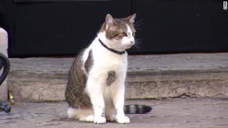 Meet Downing Street's chief mouser