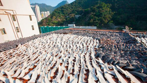 Fins dry on a rooftop in Kennedy Town in Hong Kong.