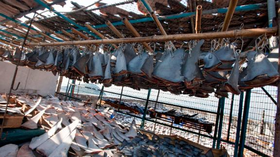 The environmental nonprofit WildAid found more than 18,000 shark fins found drying on a Hong Kong rooftop in 2013.