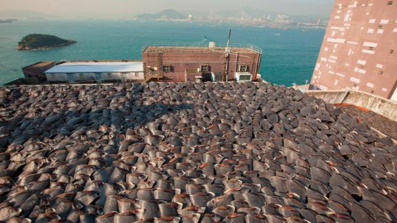 A shark fin trader was reportedly illegally subletting roof space from a fish maw trader in order to dry his wares.