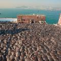 shark fin drying 3