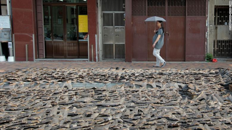 Shark fin with skin, during the drying process, taken in Hong Kong, near Sheung Wan.