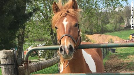 Allison Dotzel of Pennsylvania says her pony, Finn, is very inquisitive.