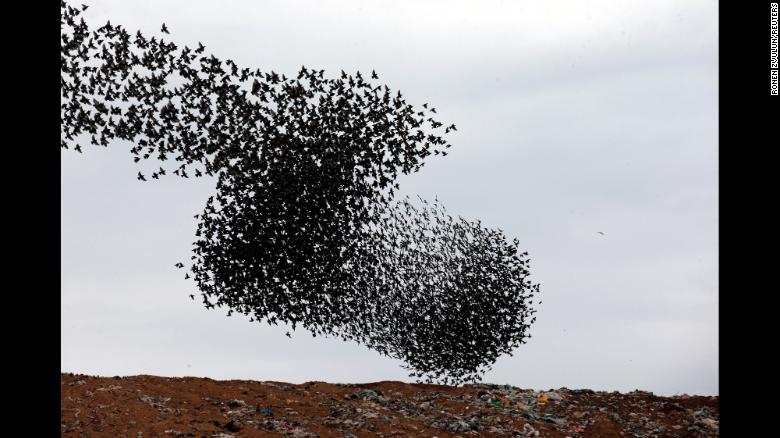 Starlings fly above a waste facility near Rahat, Israel, on Sunday, December 30.