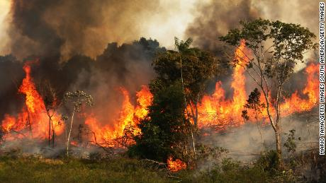 Image result for amazon rainforest fires