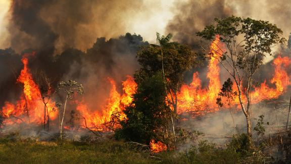 A fire burns trees next to grazing land in the Amazon basin on November 22, 2014 in Ze Doca, Brazil.