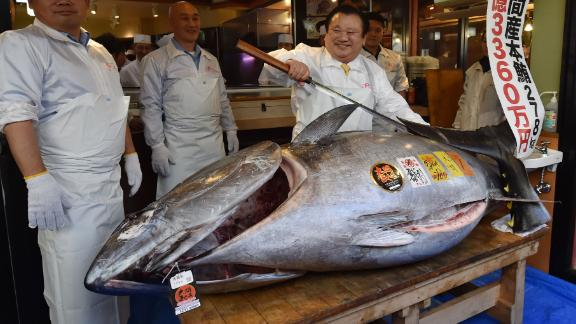 Kiyoshi Kimura (R), president of sushi restaurant chain Sushi-Zanmai, displays a 278kg bluefin tuna at his main restaurant in Tokyo on January 5, 2019. - A Japanese sushi entrepreneur paid a record $3.1 million for a giant tuna on January 5 as Tokyo's new fish market, which replaced the world-famous Tsukiji late last year, held its first pre-dawn New Year's auction. (Photo by Kazuhiro NOGI / AFP)        (Photo credit should read KAZUHIRO NOGI/AFP/Getty Images)