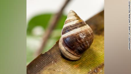 Lonely George The Last Snail Of His Kind Has Died Cnn