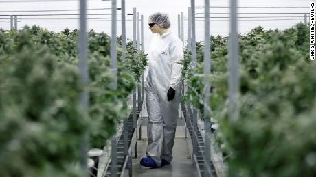 Several large consumer companies will focus on pot this year