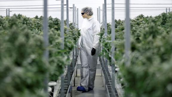 Section grower Corey Evans walks between flowering marijuana plants at the Canopy Growth Corporation facility in Smiths Falls, Ontario, Canada, January 4, 2018. Picture taken January 4, 2018. To match Insight CANADA-MARIJUANA/INNOVATION   REUTERS/Chris Wattie