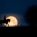 Edward Whitaker Racing Post blue supermoon