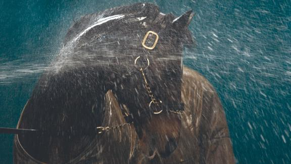 "Another picture that has defined his career is this shot of the great stallion Danehill being hosed down at  Coolmore Stud in Ireland in 2003. ""I just love the whole effect, how the water is reacting over the horse. He turns his neck so it was almost like a massage to him, and you can see how much he's enjoying it. I had to shoot it on a slow shutter speed and there's a real sense of movement in the water, and the light is just lovely."""