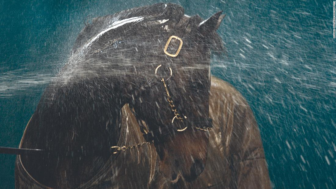 "Another picture that has defined his career is this shot of the great stallion Danehill being hosed down at  Coolmore Stud in Ireland in 2003. ""I just love the whole effect, how the water is reacting over the horse. He turns his neck so it was almost like a massage to him, and you can see how much he's enjoying it. I had to shoot it on a slow shutter speed and there's a real sense of movement in the water, and the light is just lovely.""<br />"