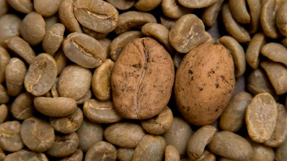 Beans of threatened Ambongo coffee among arabica coffee in Madagascar.