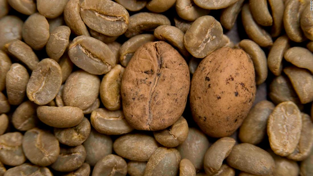 The world's most popular coffee species are going extinct. And scientists say we are to blame