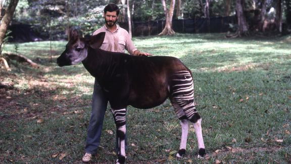 Top: John Lukas at the reserve in the early years. Below: With an okapi, when they were still kept at the Epulu station.