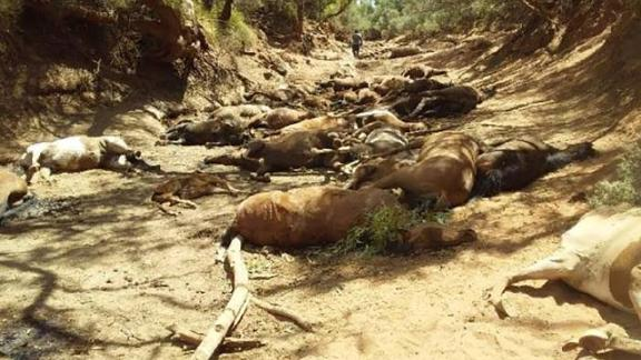 Dead feral horses were found in a dried-up waterhole in the Northern Territory, Australia.