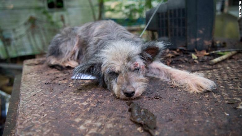 One of more than 60 dogs in a suspected cruelty case in Jefferson County Arkansas in 2016.