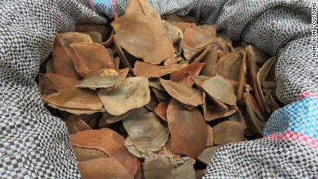 Pangolin scales seized from the raid.
